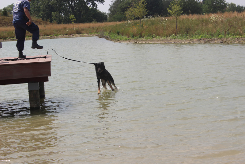 K9 Water Training 085.jpg