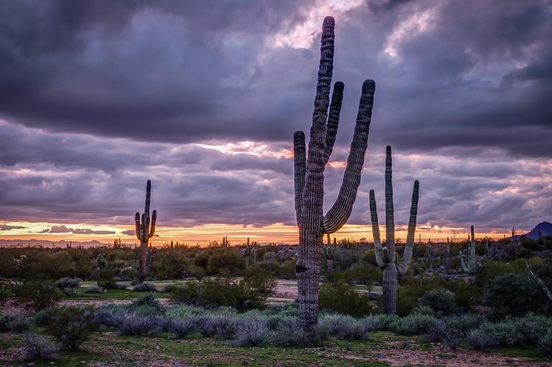 Arizona (10).jpg