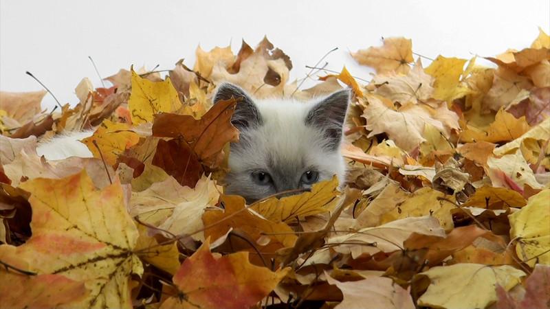 kitten_leaves_10.mov
