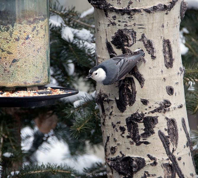 tell bird 2.jpg