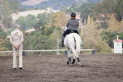 White horse black stripe