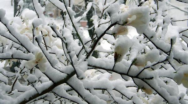 March 26, 2011 Snow
