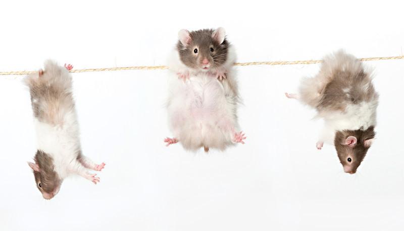 Hamsters hang'n.jpg