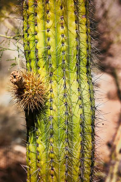 2017-10Oct-Tucson-198-Edit.jpg