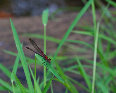 Butterflies, Dragonflies , insects and spiders