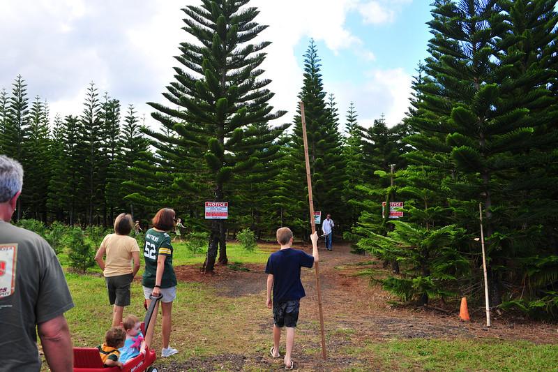 Hawaii_Christmas_Tree_2.jpg