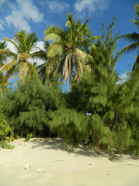 palm trees on spring beach