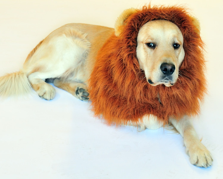 Samson_lion.jpg
