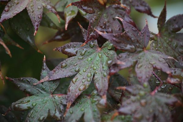 Leaves & Rain