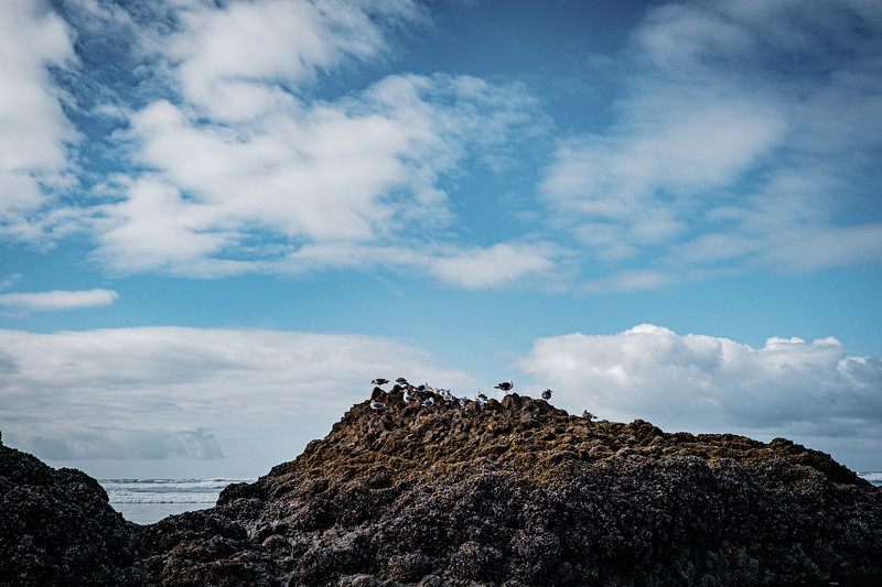 coast-pictures-by-mike-hall-48.jpg