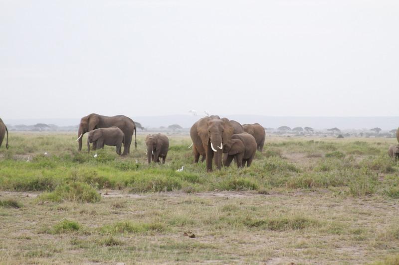 Kenya 2019 #2 423.JPG