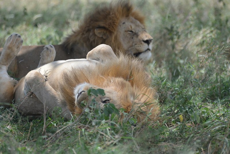East Africa Safari 332.jpg