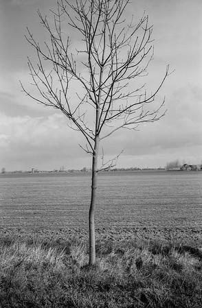 1995.02.26  Paysage avec arbres torturées