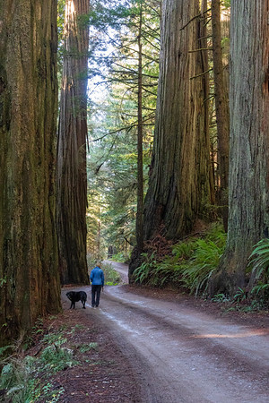 redwoods after christmas