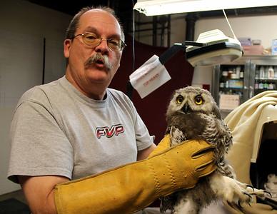 Snowy Owl 11-450