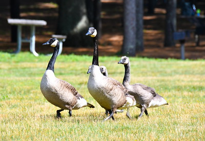 Enders Falls, Saville Dam, Cherry Brook Farm & Stratton Brook State Park - June 28, 2021
