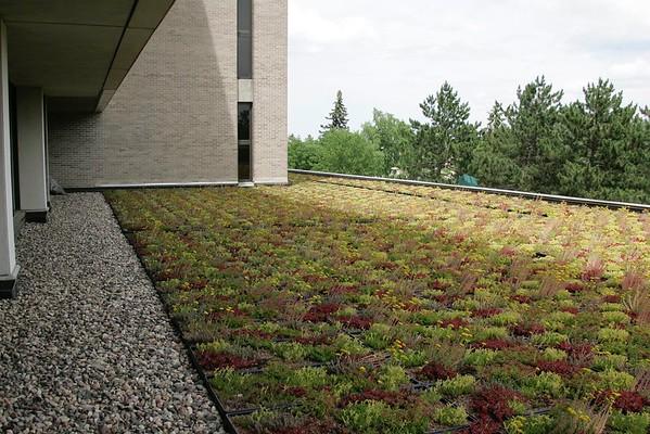 ALB (LRC) Green Roof