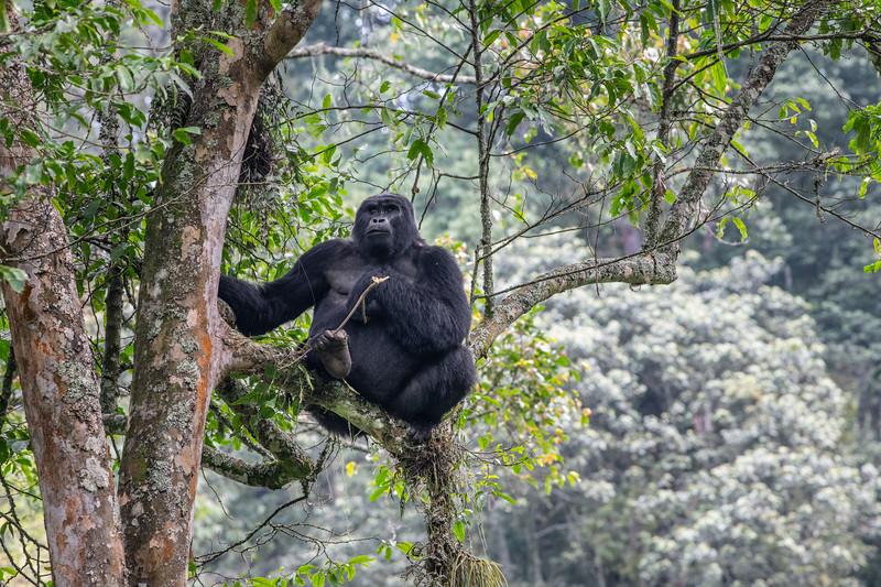 Uganda_T_Gor-1543.jpg