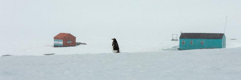 2019_01_Antarktis_05266.jpg