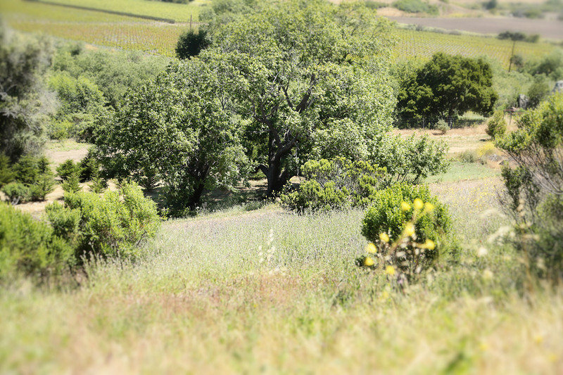 email acreage for sale property cambria a319B1240.jpg