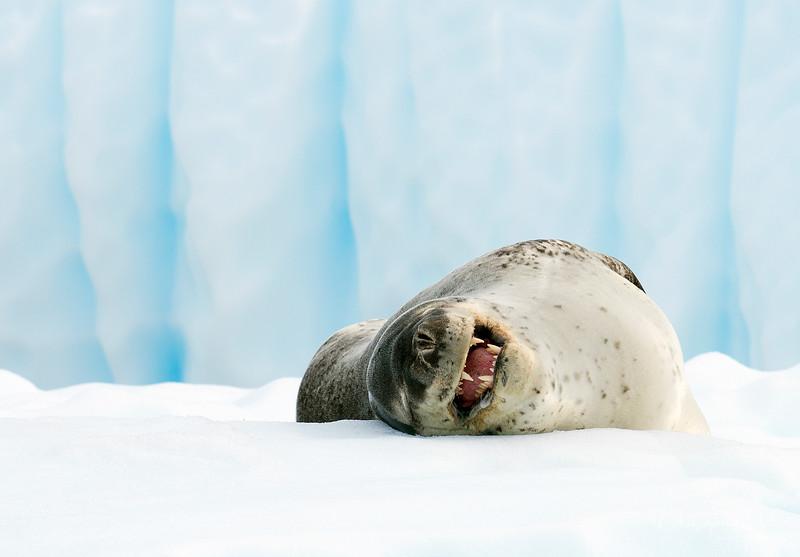 icebergs_pleneau_island_lemaire_20130106_7736.jpg