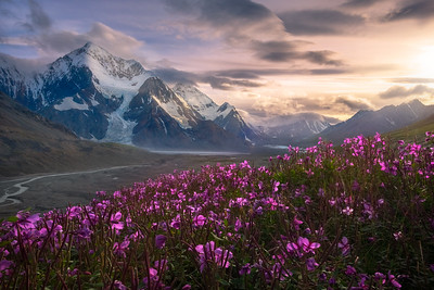 New Release-Wild Alaska