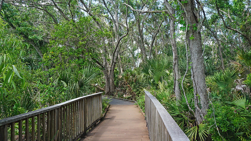 Boardwalk in oak hammock