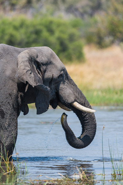 Botswana_June_2017 (2631 of 6179).jpg