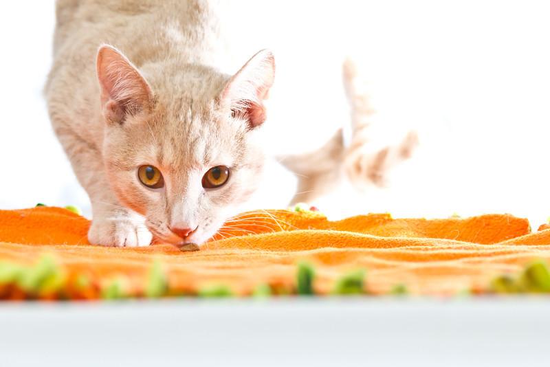 1202_Cats_176.jpg