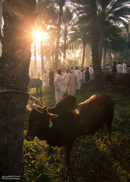 IMG_9812-Saroor-Samail- Oman.jpg