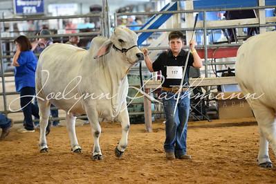 Open Cattle Ringshots - American