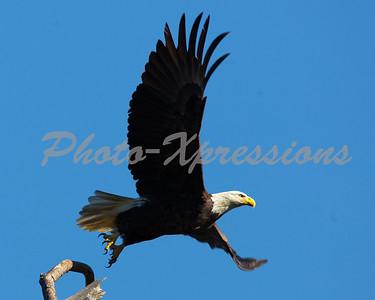 Baytown Eagles 12-1-10