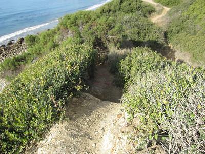 Sea Dahlia Trail-Abalone Cove