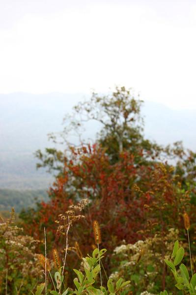 Pisgah Forest 9-30-12 116.jpg