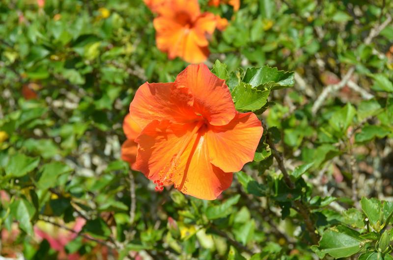 Oahu Hawaii 2011 - 95.jpg