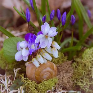 Snails and Violets