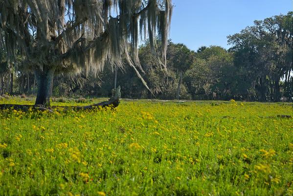 Dinner Island Ranch Florida