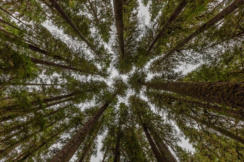 solducfallsuptrees.jpg
