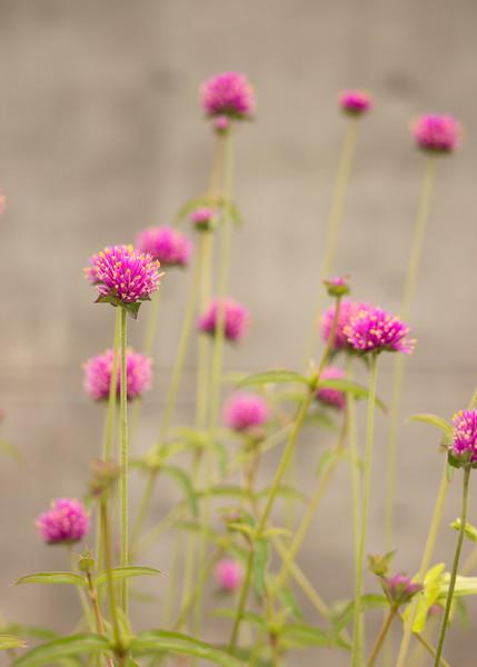 KoRedfield-Floral22.jpg