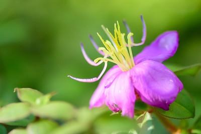 Images from folder Naples Botanical