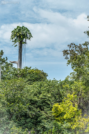 20140120_AMAZON_JUNGLE (17 of 72)