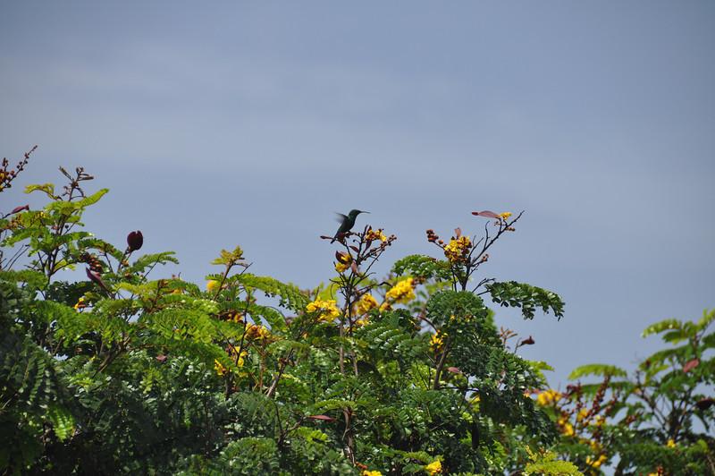 St Lucia 2013-0075.jpg