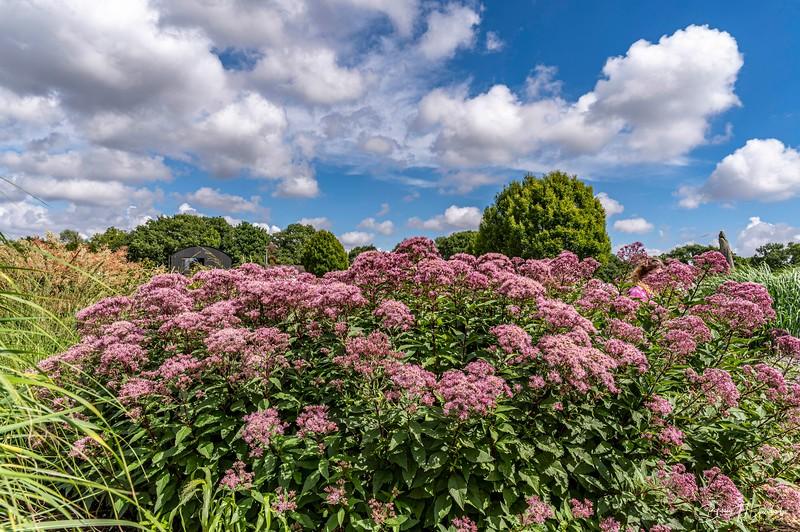 Sussex Prairie Gardens-0297.jpg