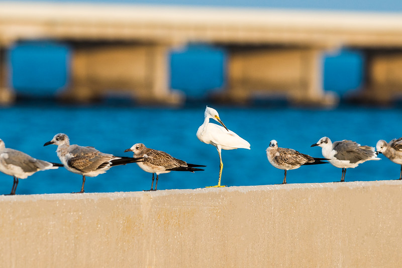 Skyway bridge birds-3.jpg