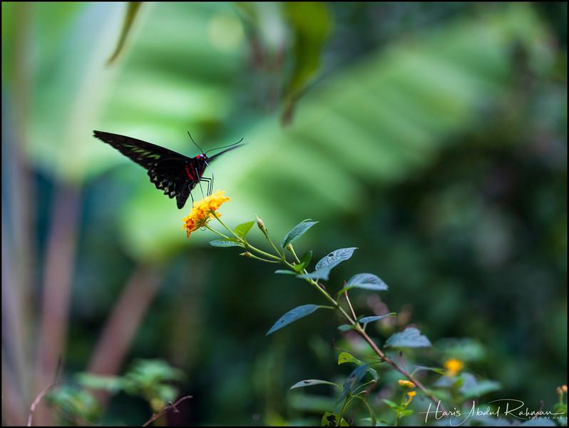 200104 KL Butterfly Park 5.jpg