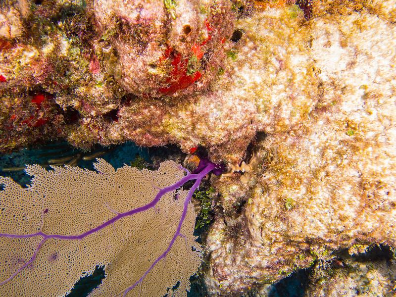 Tulum Trip - Diving 20130405-17-42 _405262604.jpg