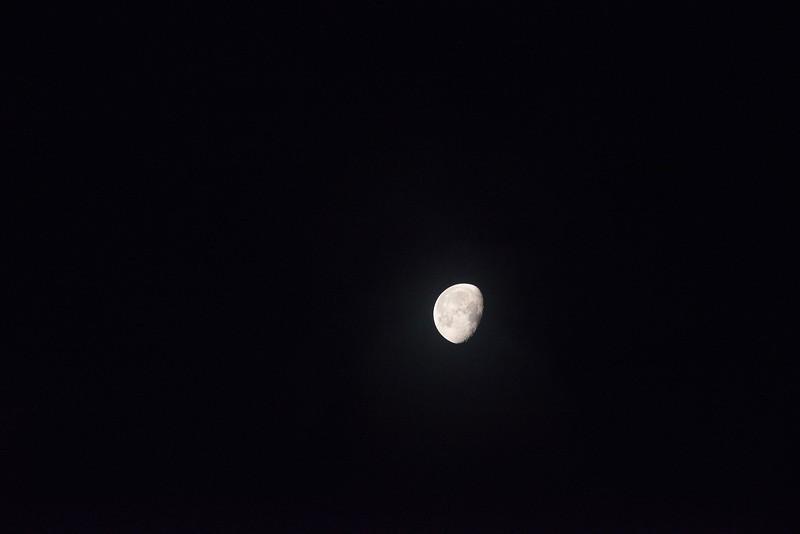 Moon Churchill 2015 -1.jpg