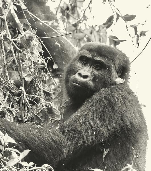 Uganda_T_Gor-1651.jpg