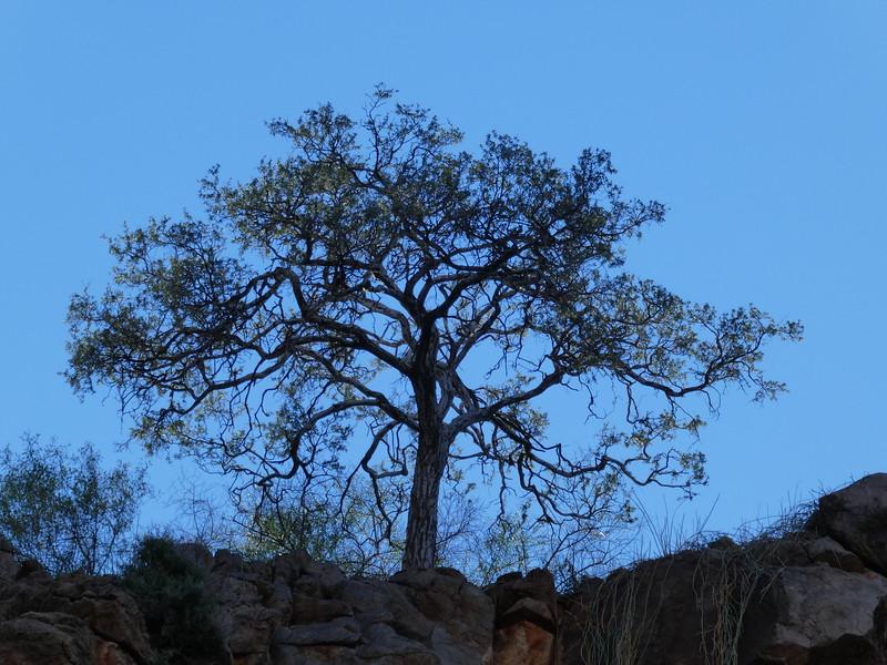 Namibia Lumix  (133).JPG