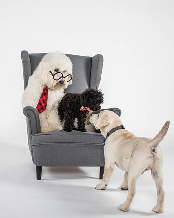 BIDT Puppies 2020